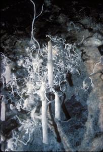 barencs de fournès-cabardès